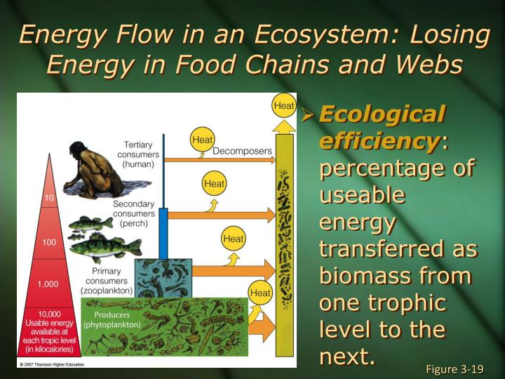 Energy Flow in an Ecosystem: Losing Energy in Food Chains and Webs