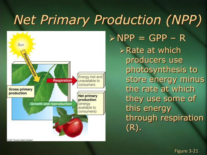 Net Primary Production (NPP)