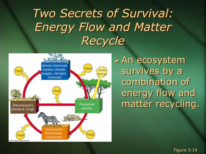 Two Secrets of Survival: Energy Flow and Matter Recycle