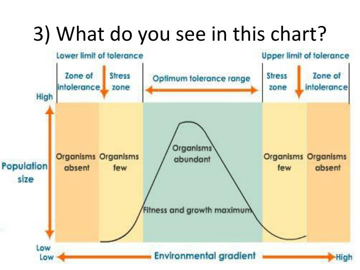 3) What do you see in this chart?
