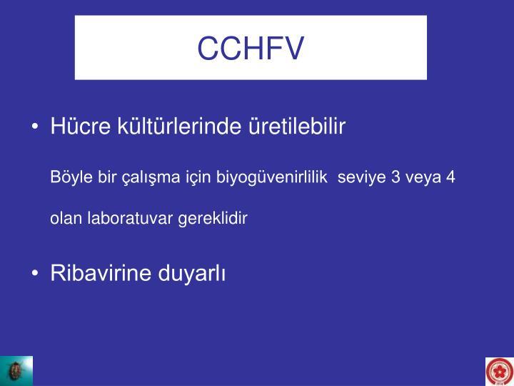 CCHFV