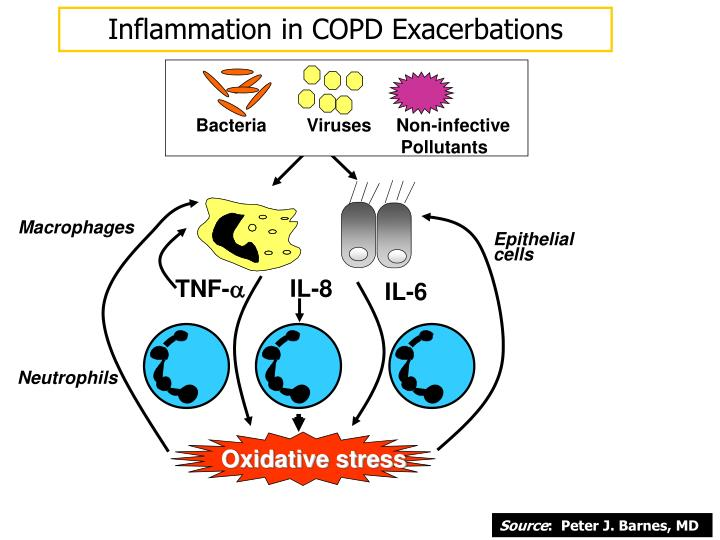 Inflammation in COPD Exacerbations