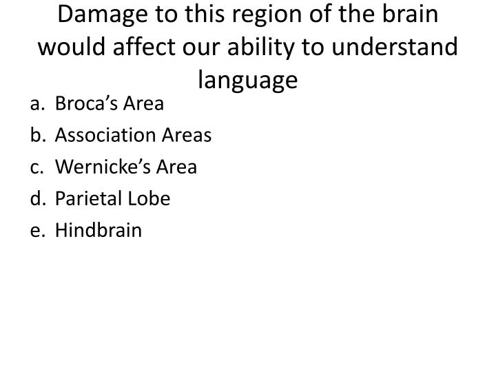 Damage to this region of the brain would affect our ability to understand language