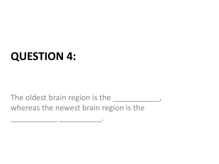 The oldest brain region is the ___________, whereas the newest brain region is the  ___________ __________.