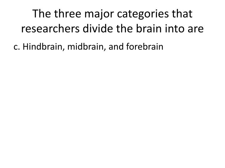 The three major categories that researchers divide the brain into are