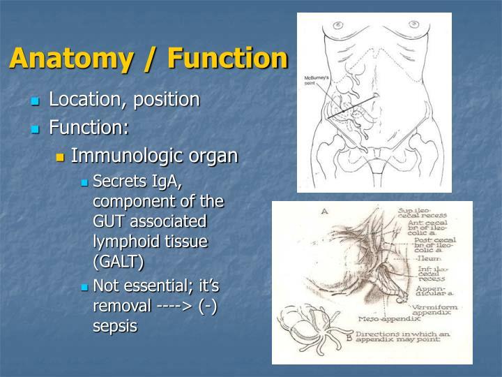 Anatomy function