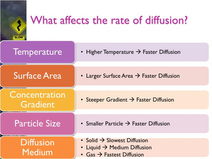 What affects the rate of diffusion?