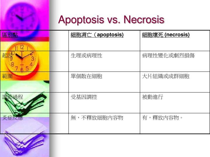 Apoptosis vs. Necrosis