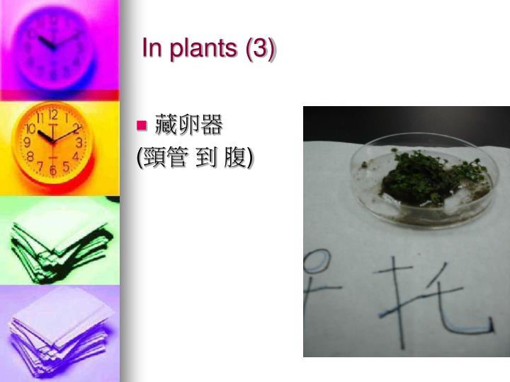 In plants (3)