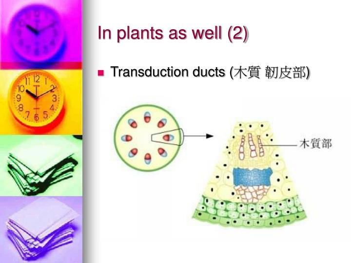 In plants as well (2)