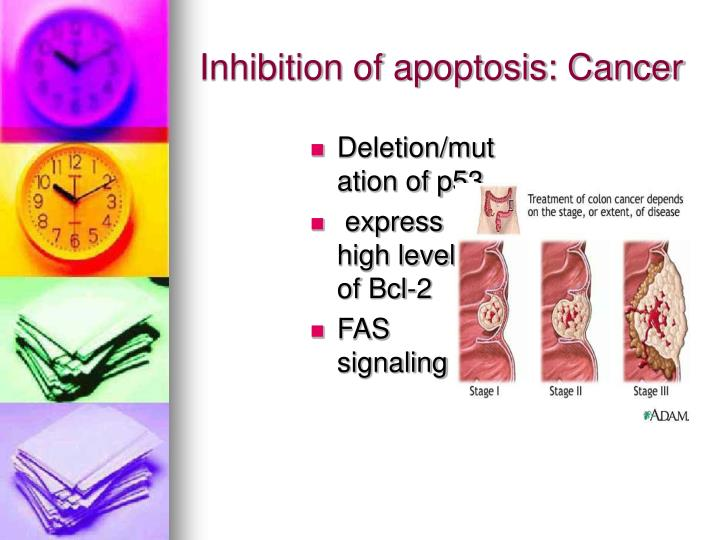 Inhibition of apoptosis: Cancer