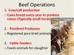 beef operations