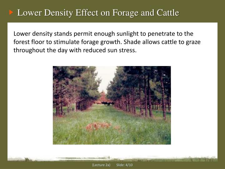Lower Density Effect on Forage and Cattle