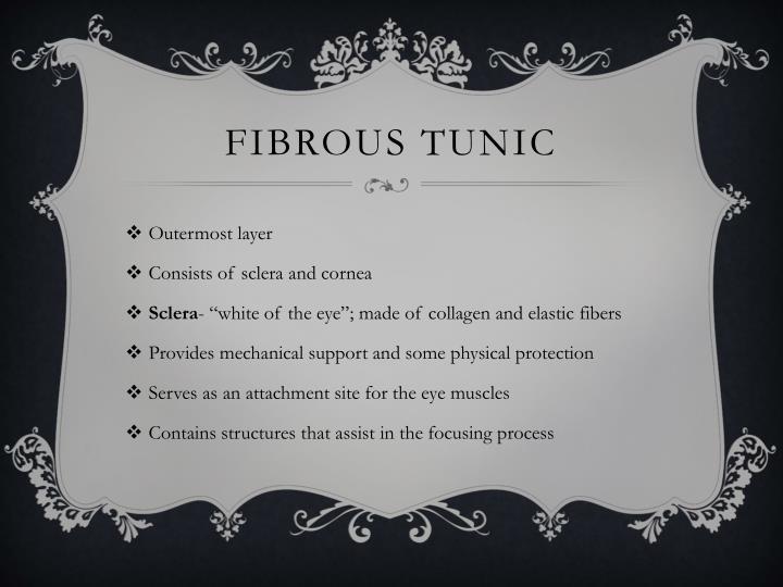 Fibrous tunic