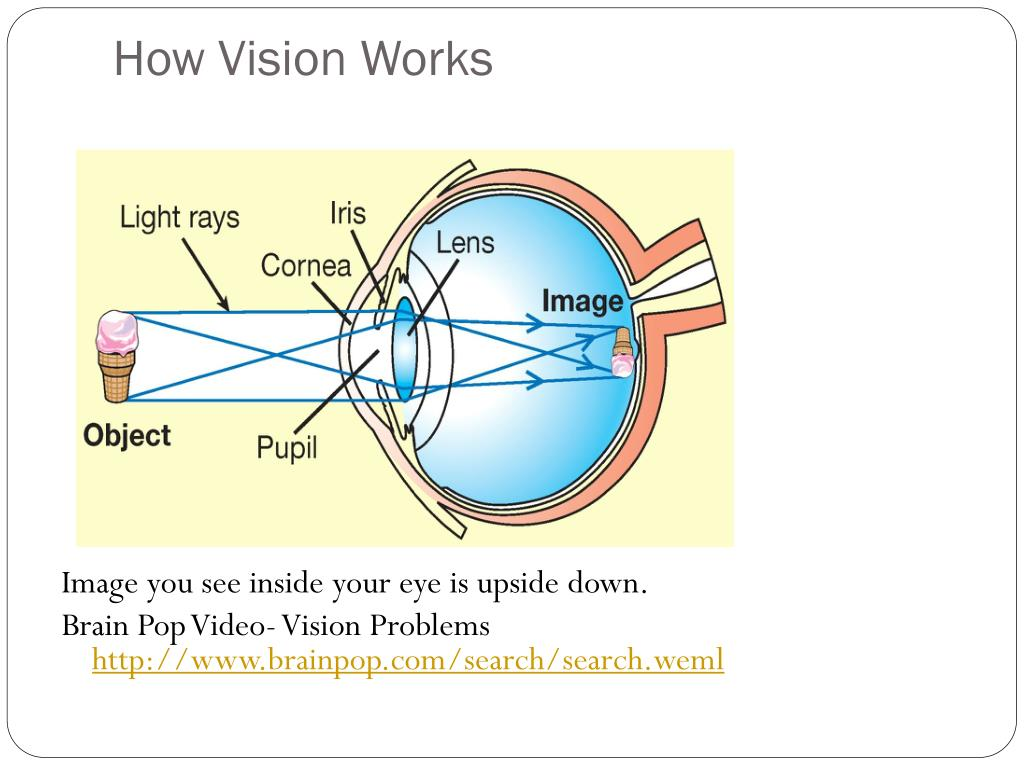 PPT - The Eye PowerPoint Presentation, free download - ID ...