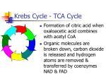 krebs cycle tca cycle
