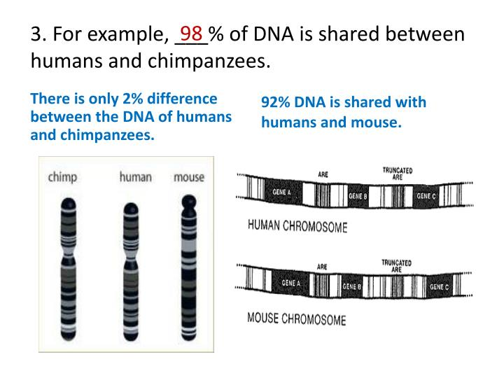 shared trait between humans and chimpanzees 10 comparisons between chimps and humans kate mulcahy another carnivorous trait unlike humans, chimpanzees have no concept of sexual jealousy or.