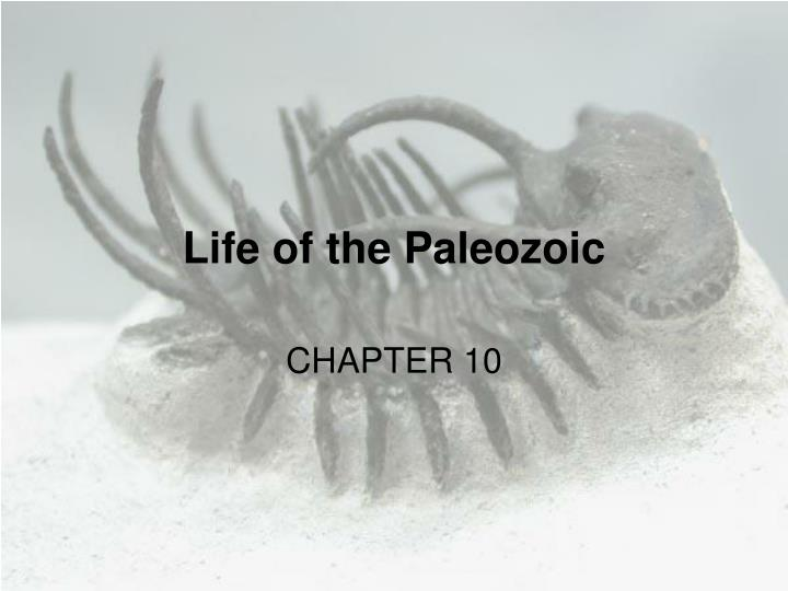 life of the paleozoic n.