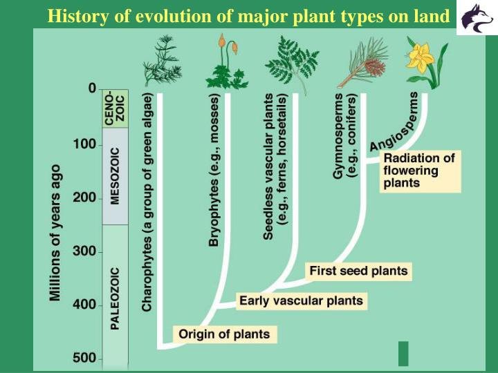 History of evolution of major plant types on land
