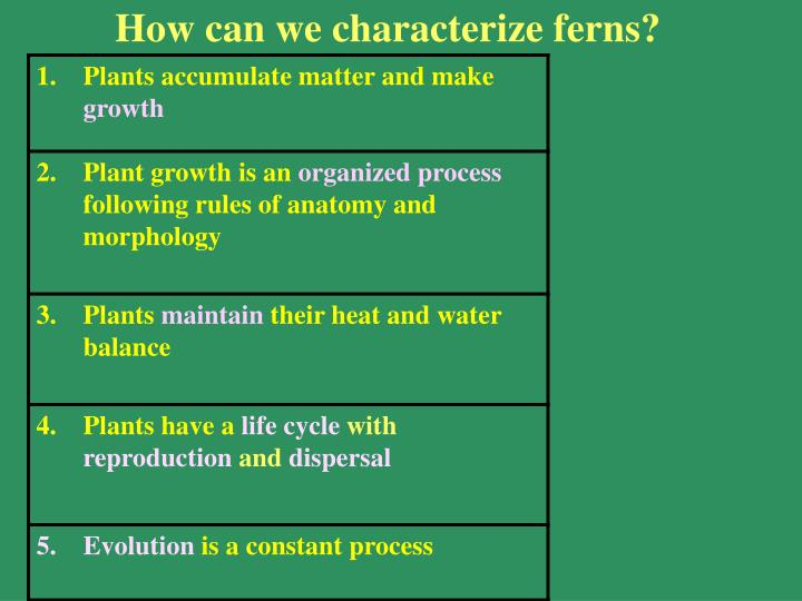 How can we characterize ferns?