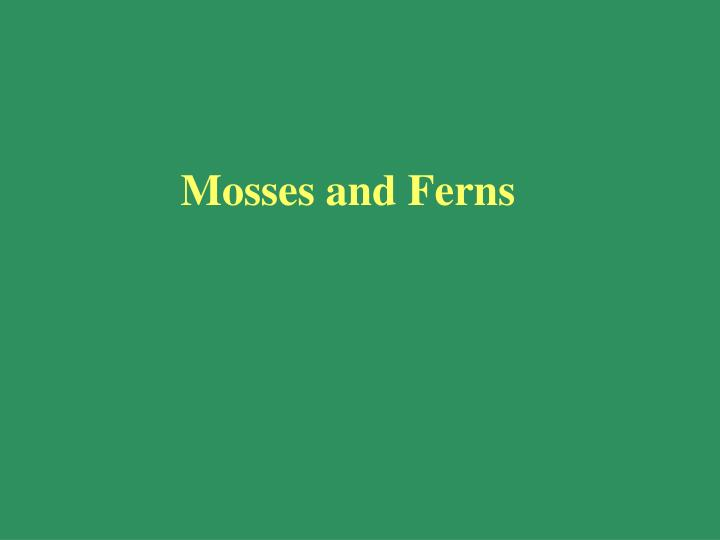 Mosses and ferns