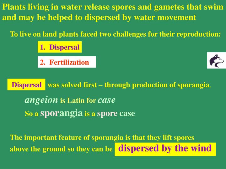 Plants living in water release spores and gametes that swim and may be helped to dispersed by water movement