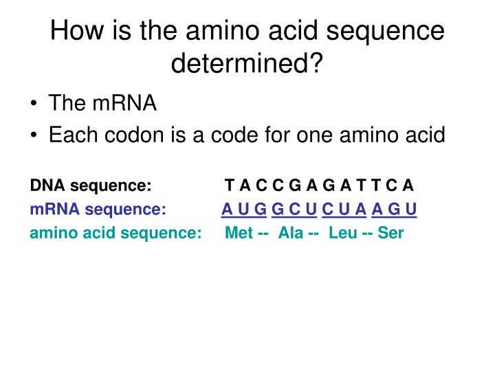 How is the amino acid sequence determined?