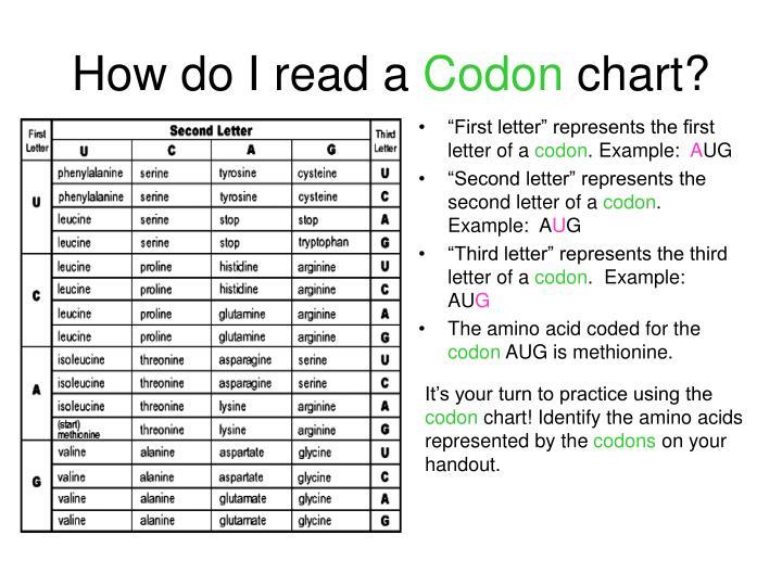 How Do I Read A Codon Chart