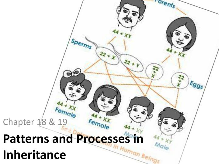 patterns and processes in inheritance n.