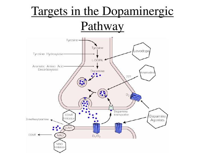 Targets in the Dopaminergic Pathway