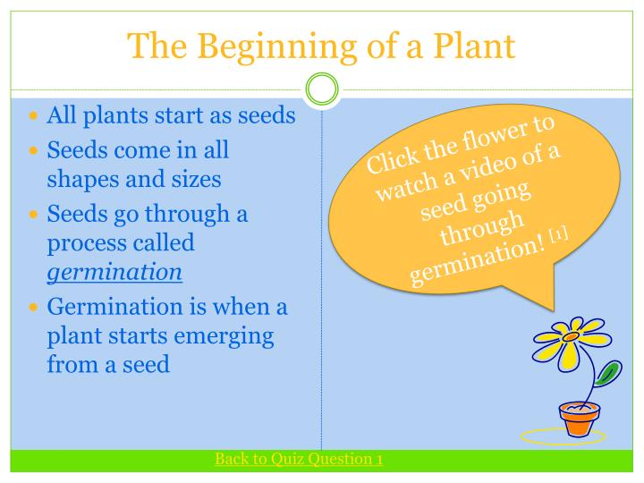 The Beginning of a Plant