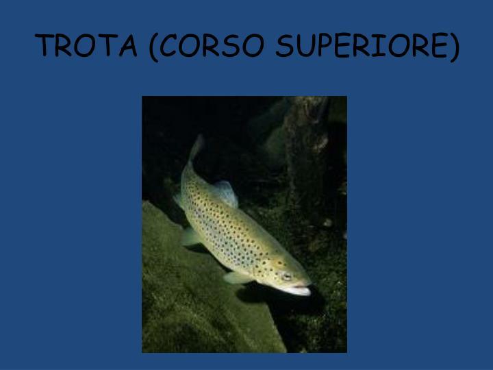 TROTA (CORSO SUPERIORE)