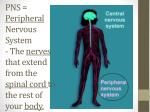 pns peripheral nervous system the nerves that extend from the spinal cord to the rest of your body