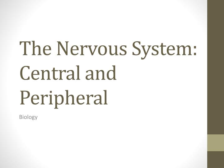 the nervous system central and peripheral