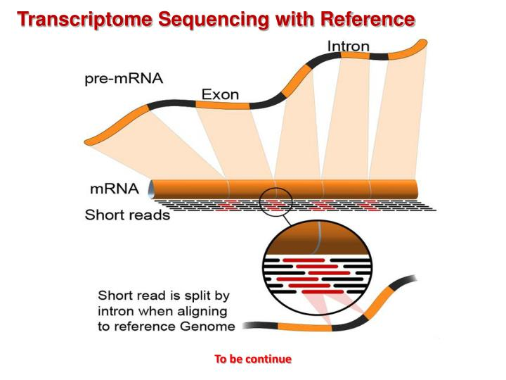 challenges in gene sequencing For gene families and genes containing repeat elements,  repetitive dna and next-generation sequencing: computational challenges and solutions author.