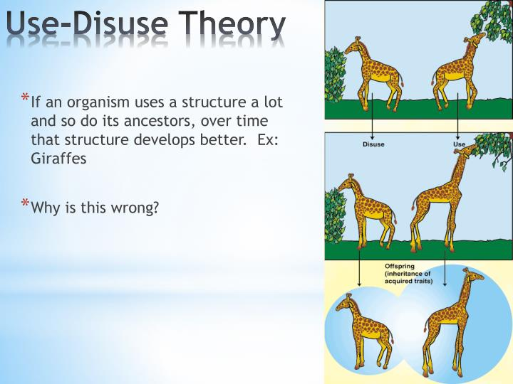 If an organism uses a structure a lot and so do its ancestors, over time that structure develops better.  Ex: Giraffes