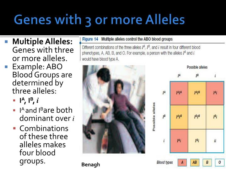 Genes with 3 or more Alleles