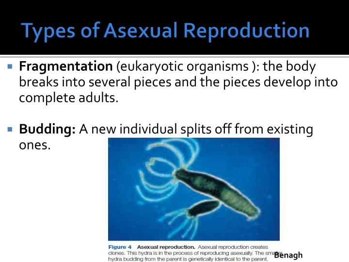 Types of Asexual Reproduction