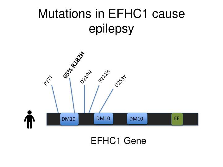 Mutations in efhc1 cause epilepsy