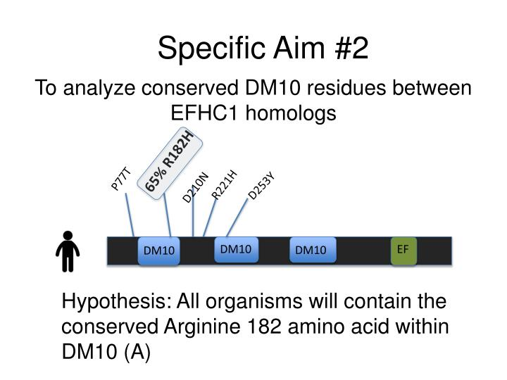 To analyze conserved DM10 residues between EFHC1 homologs