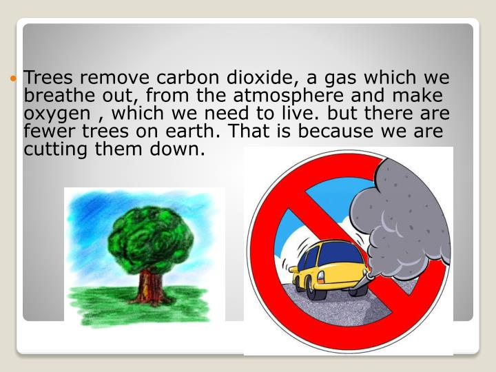 Trees remove carbon dioxide,