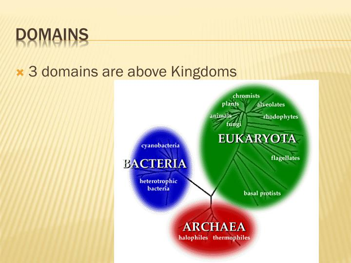 3 domains are above Kingdoms