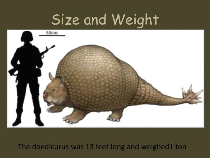 Size and