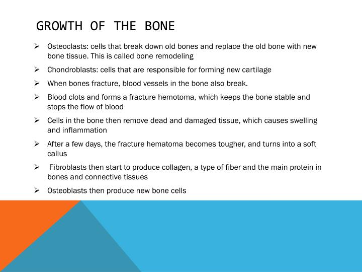 Growth of the bone