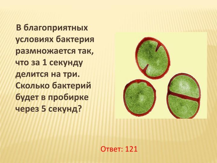 В благоприятных условиях бактерия размножается так, что за 1 секунду делится на три. Сколько бактерий будет в пробирке через 5 секунд?
