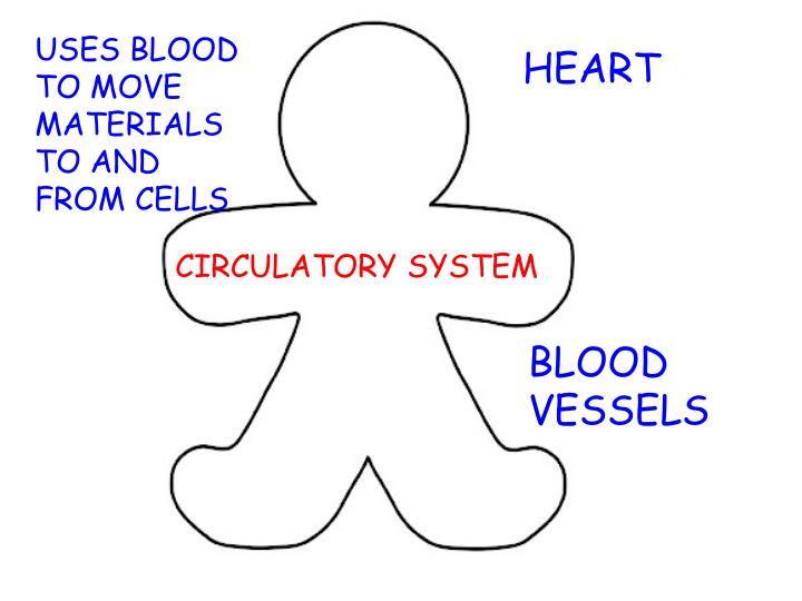 USES BLOOD TO MOVE MATERIALS TO AND FROM CELLS