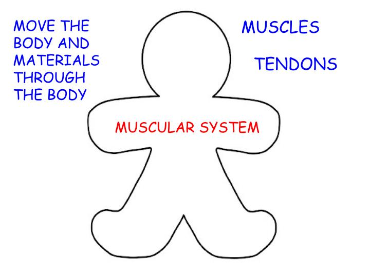 MOVE THE BODY AND MATERIALS THROUGH THE BODY