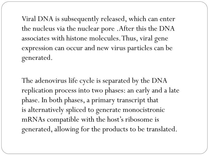 Viral DNA is subsequently released, which can enter thenucleusvia thenuclear