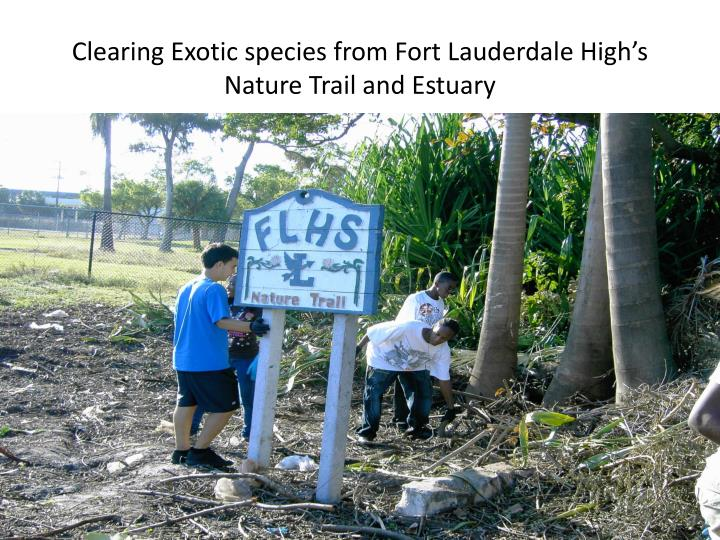 Clearing Exotic species from Fort Lauderdale High's Nature Trail and Estuary