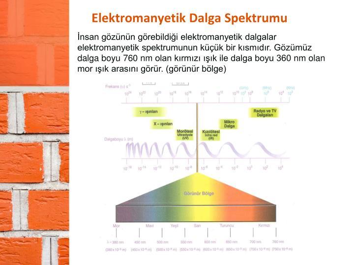 İnsan gözünün görebildiği elektromanyetik dalgalar elektromanyetik spektrumunun küçük bir kısmıdır. Gözümüz dalga boyu 760
